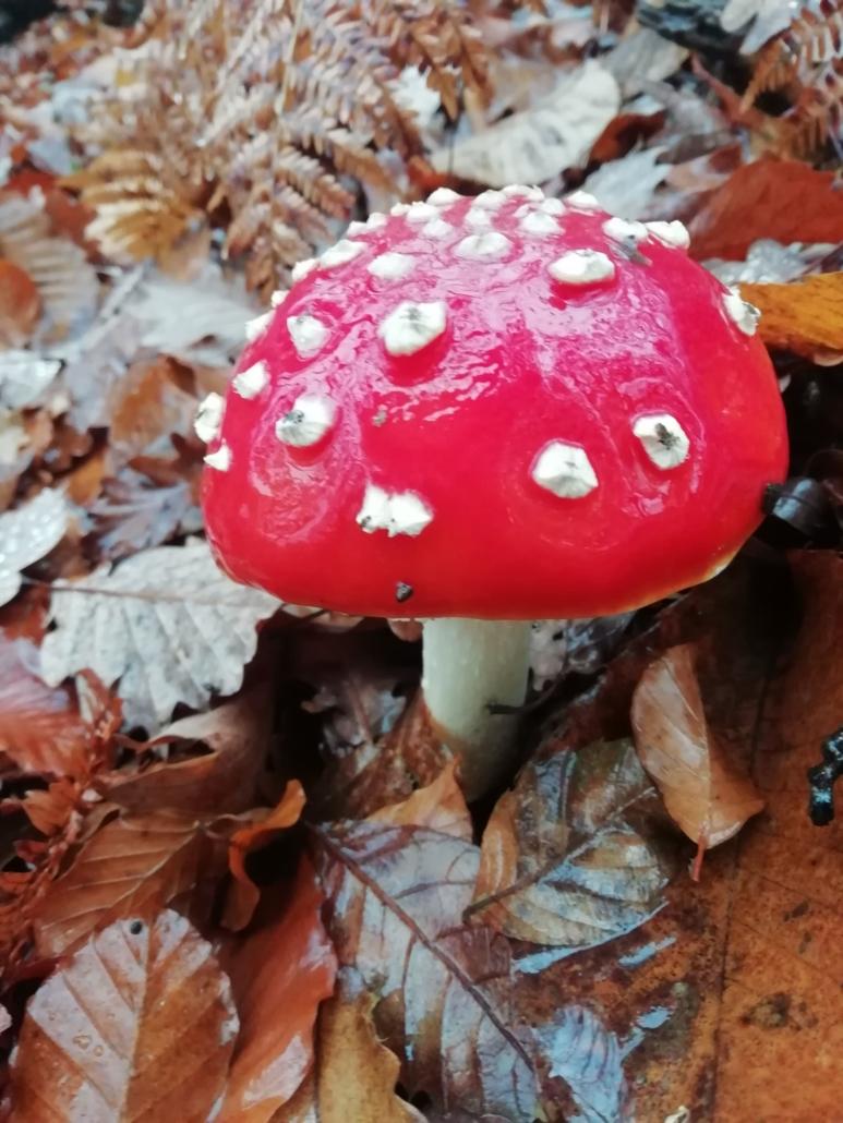 Un fungo da non prendere