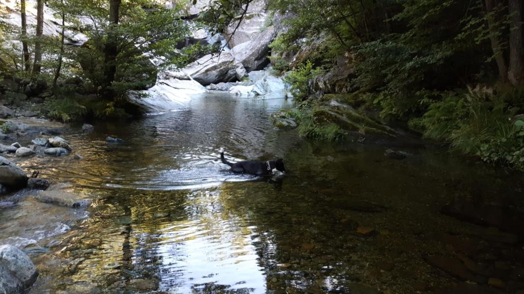 Un bagno nel fiume per i nostri amici a 4 zampe
