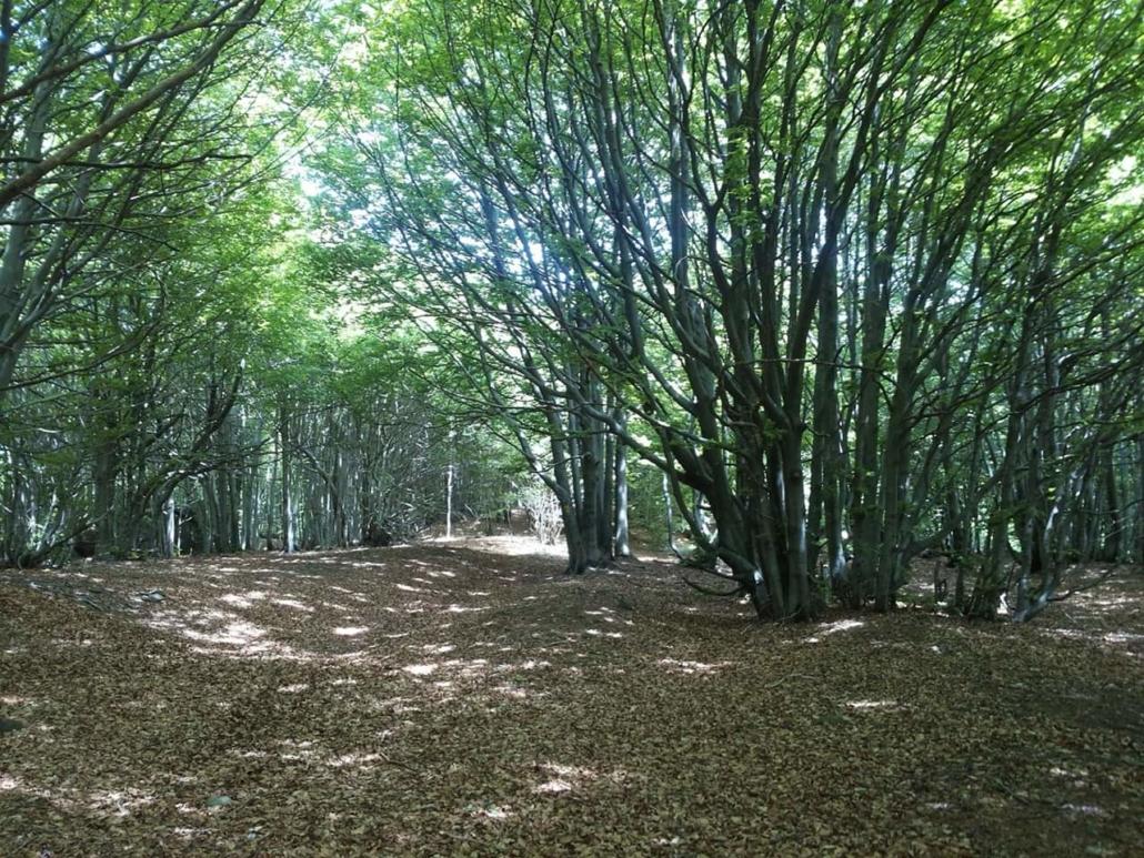 Trekking nei boschi