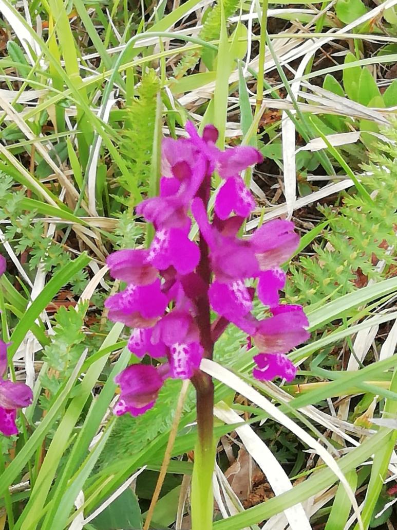 Fotografare i fiori: le orchidee