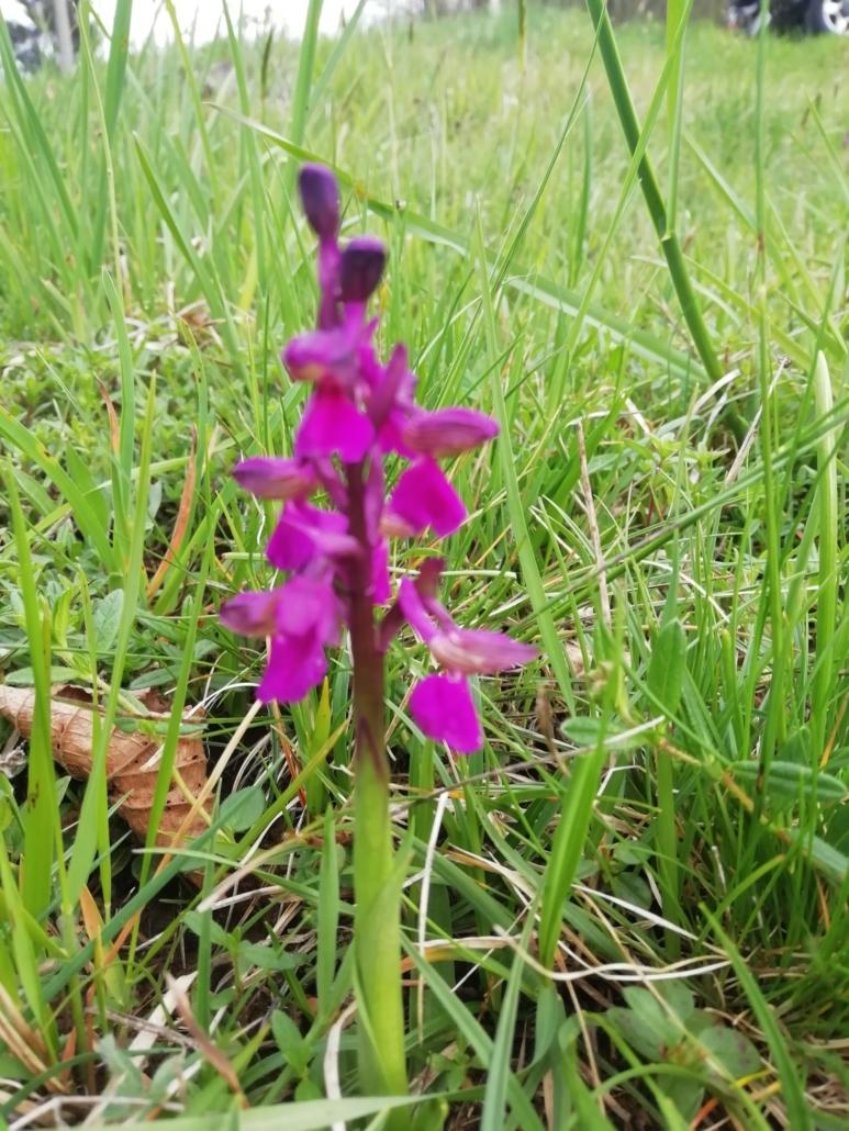 Fotografare i fiori: le orchidee selvatiche